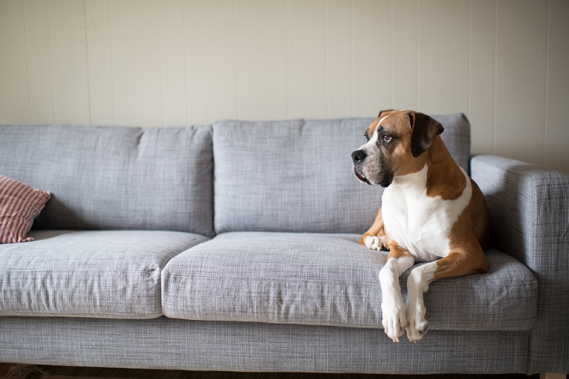 Bringing Your Dog to IKEA: Is it Allowed?