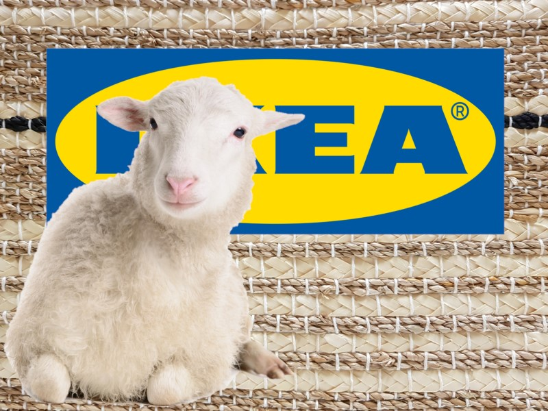 Are IKEA Sheepskin Rugs Ethical?