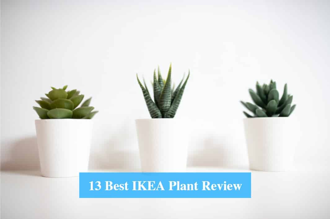 Best IKEA Plant