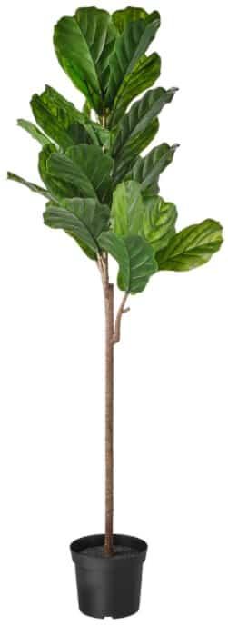 FEJKA Artificial Potted Plant, Fiddle-Leaf Fig