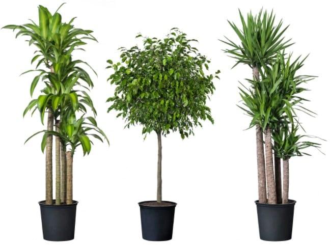 Tropisk Potted Plant